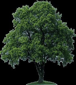 plant a tree  sath ash wednesday clip art clip art ash wednesday clip art for 2018